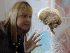 Мозг воспринимает лекарства только в определенные часы