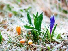 Украину накроют заморозки