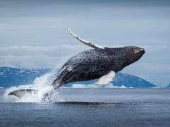 Мир достиг согласия: киты нуждаются в защите