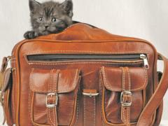Как по закону улететь в отпуск с домашними животными