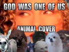 Животные перепели известный хит