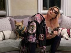 У Леди Гаги украли любимых собак, а в их выгульщика стреляли - певица без ума от горя